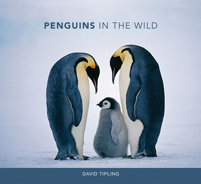 Penguins in the Wild