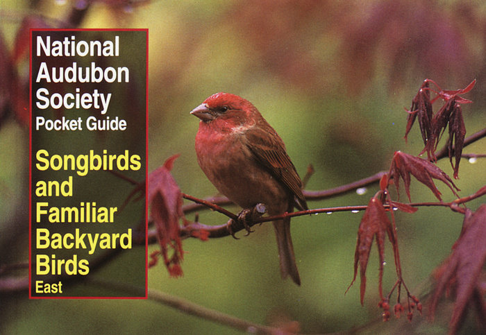 National Audubon Society Pocket Guide to Songbirds and Familiar Backyard Birds: Eastern Region