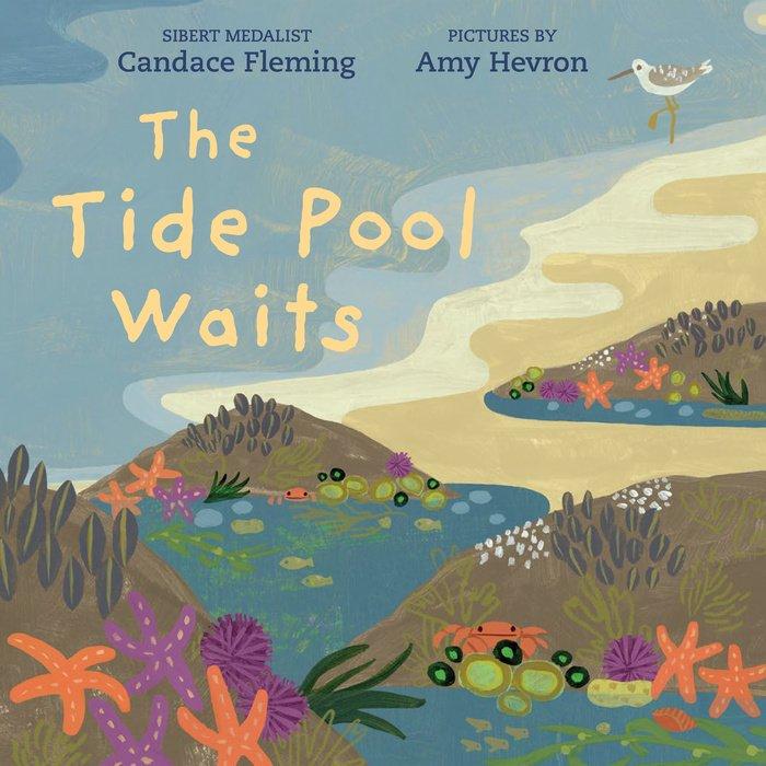 The Tide Pool Waits