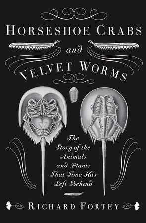 Horseshoe Crabs and Velvet Worms by