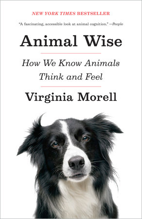 Animal Wise by
