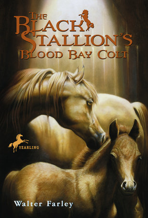 The Black Stallion's Blood Bay Colt by