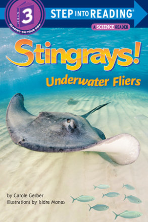 Stingrays! Underwater Fliers