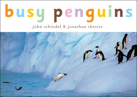 Busy Penguins by