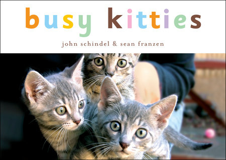 Busy Kitties by John Schindel