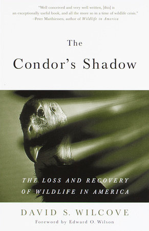 The Condor's Shadow by