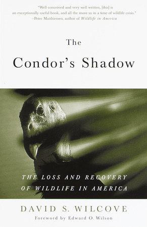 The Condor's Shadow by