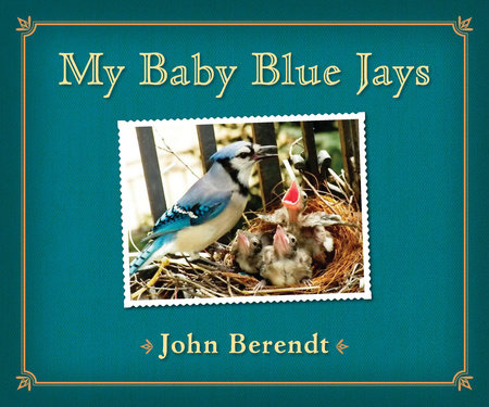 My Baby Blue Jays