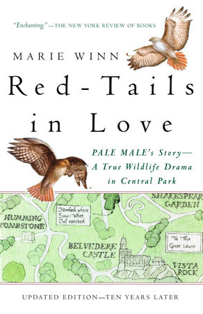 Red-Tails in Love by