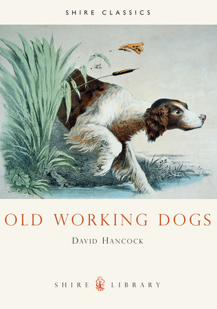 Old Working Dogs by David Hancock