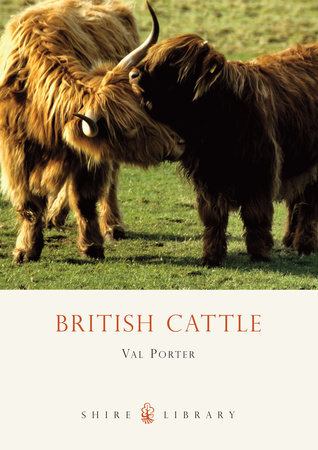 British Cattle by
