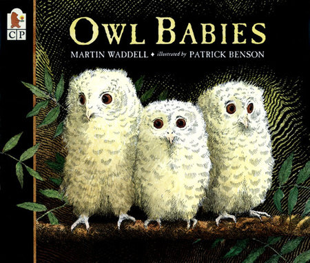 Owl Babies by