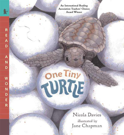 One Tiny Turtle by