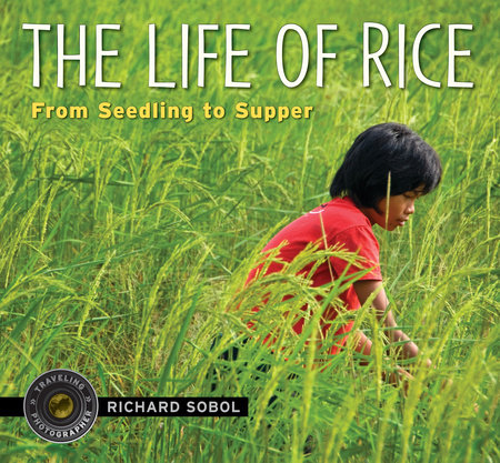 The Life of Rice by