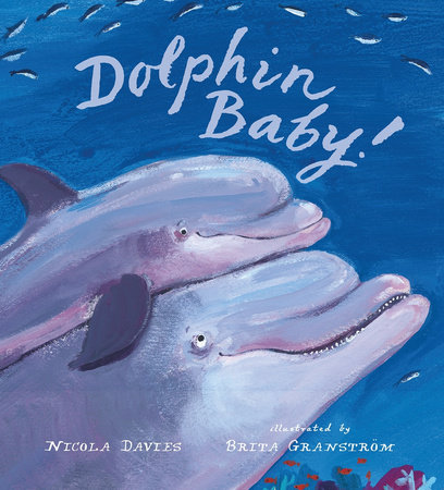 Dolphin Baby! by