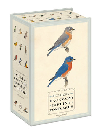 Sibley Backyard Birding Postcards by David Sibley