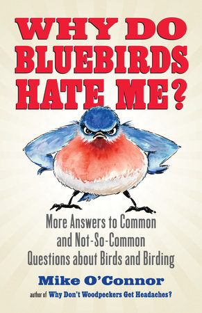 Why Do Bluebirds Hate Me? by