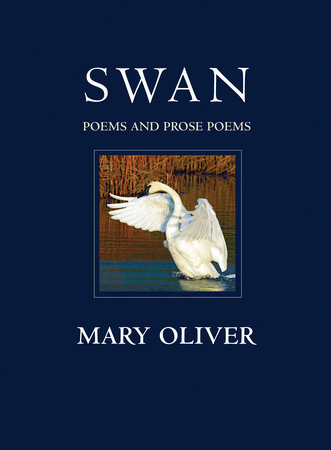 Swan by