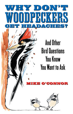 Why Don't Woodpeckers Get Headaches? by
