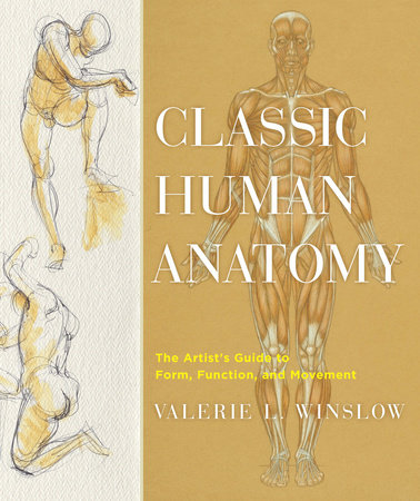 Classic Human Anatomy by