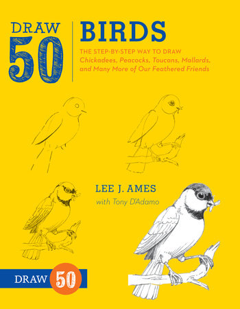 Draw 50 Birds by