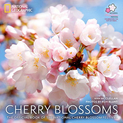 Cherry Blossoms by Ann McClellan