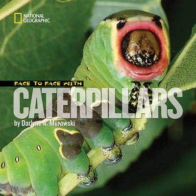 Face to Face with Caterpillars by