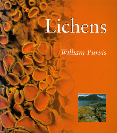 Lichens by William Purvis