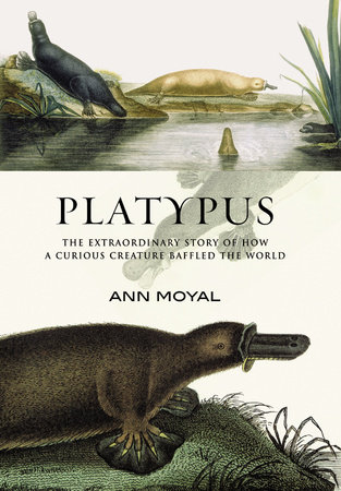 Platypus by Ann Moyal