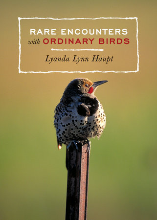 Rare Encounters with Ordinary Birds by