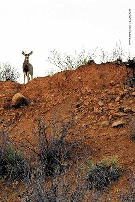 Buck Shots by