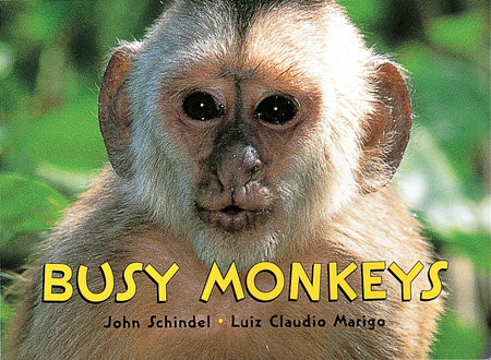 Busy Monkeys by John Schindel