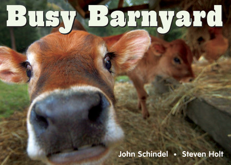 Busy Barnyard by