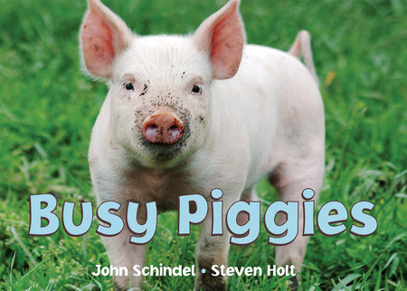 Busy Piggies by