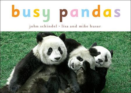 Busy Pandas by