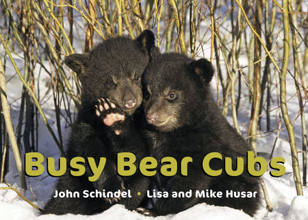 Busy Bear Cubs by