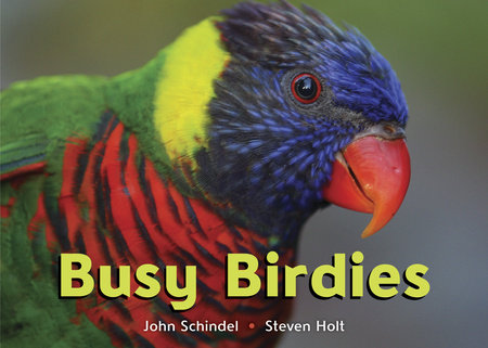 Busy Birdies by
