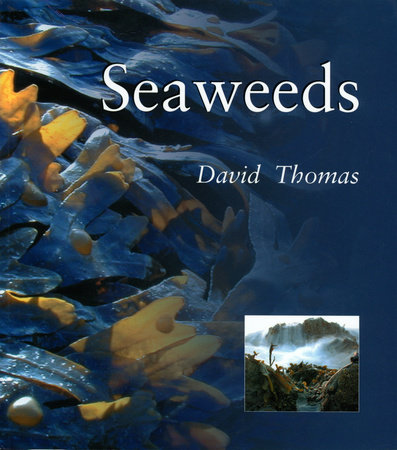 Seaweeds by David N. Thomas