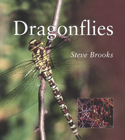 Dragonflies by Steve Brooks