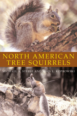 North American Tree Squirrels by