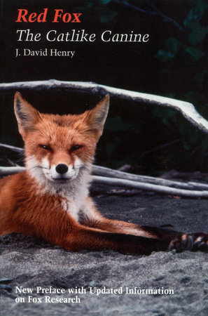 Red Fox by J. David Henry
