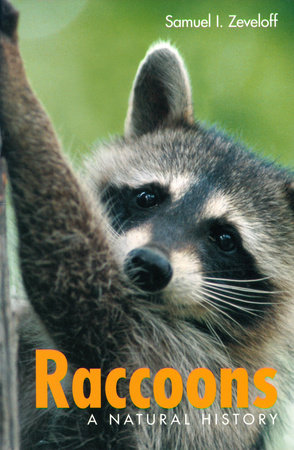 Raccoons by