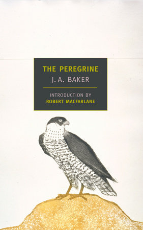 The Peregrine by