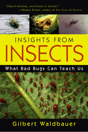 Insights From Insects by